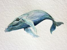 Humpback Whale  -  an Aquatic Beastie original watercolour