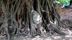 Angkor Wat to nie jedyne miejsce w Azji, gdzie można zobaczyć zapierającą dech w piersiach antyczną architekturę. Dawna stolica Syjamu, Ayutthaya, również należy do miejsc, które wręcz trzeba zobaczyć!