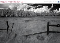 SALE Forest Wall Print  Fence  Pine Trees  by AroundTheGlobeImages, $25.50