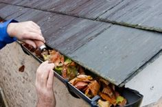 Is your roof mossy, leafy or leaking? Our roof cleaning service can help. Call Northwest Roof Maintenance today for a roof cleaning: Fall Cleaning, Cleaning Hacks, Gutter Cleaning, Cleaning Mold, Roofing Services, Cleaning Business, Roof Repair, Autumn Home, Homemaking