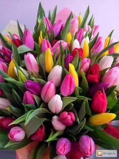 Red Tulips, Tulips Flowers, My Flower, Pretty Flowers, Fresh Flowers, Spring Flowers, Tulip Bouquet, Floral Bouquets, Tulips Garden
