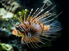 23 Images for the Beautiful and Amazing Underwater Animals World - Beauty Harmony Life