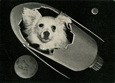 Soviet space dogs – in pictures | Art and design | The Guardian
