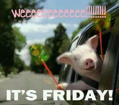 I just love this Geico pig.  Love the commercials!!!