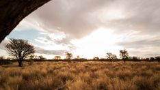 Linear pull-back abstract timelapse of a typical Savanna Bushveld landscape with Acacia trees and tall grass and an African sunset with beautiful scattered clouds. African Sunset, Acacia, Stock Footage, Grass, Country Roads, Clouds, Landscape, Abstract, Outdoor