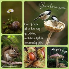Goedemorgen ( plaatjes van Jackie ) Have A Great Day, Happy Day, Good Morning, Beautiful Pictures, Words, Messages, Buen Dia, Bonjour, Pretty Pictures