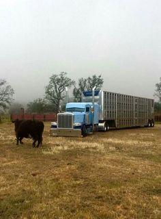 "Cause bull haulers shouldn't be ""normal""."
