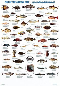 Fish of the Arabian Gulf