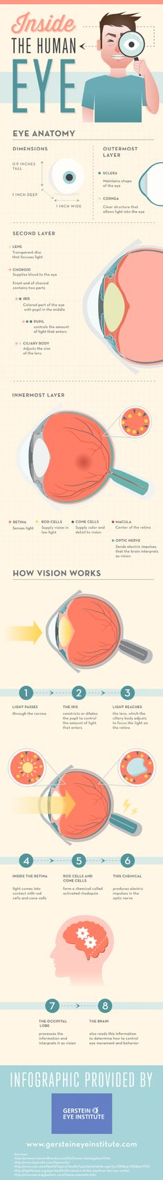 The retina is located in the innermost layer of the eye and senses light. Rod cells in the retina supply vision in low light, while cone cells in the retina supply color and detail to vision. Find more eye anatomy facts on this Chicago eye surgeon infographic.