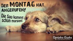 http://www.sprueche-suche.de/wp-content/uploads/2015/07/lustige-sprueche-montag-ende-wochenende.jpg