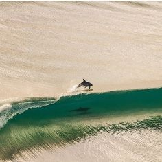Dolphins play in the breaking waves - photograph by Brodie McCabe