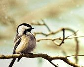Bird wall decor, chickadee in a tree, pastel blue and tan brown neutral art,  natural history, cute woodland-- My favorite bird!!