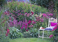 Une scène d'été tout en rose (Scènes de jardins)