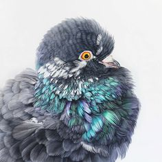 Giant Oil Paintings of Instagram-Famous Pigeon by Belgian Artist Adele Renault