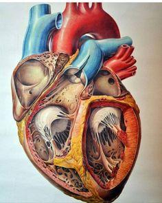 """7,027 curtidas, 32 comentários - Vivências de Hospital  (@vivenciasdehospital) no Instagram: """"A arte traduzindo as belezas da vida!  #vivenciasdehospital #cardio #cardiologia #coração…"""""""