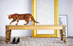 Alle Möbel individualisieren (und aufwerten) durch neuen Lack. Noch schöner durch Muster und Formen mithilfe von Schablonen. Gold ist edel!