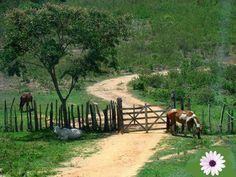 Roça lirios do campo.:   Viver em paz é você olhar para o mundo de consci...