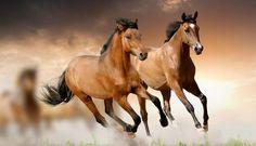 caballos-salvajes.jpg (1255×718)