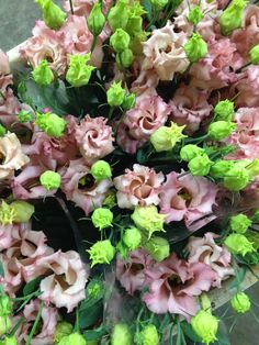 Lisianthus Falda Salmon...peachy pink shade. Sold in bunches of 10 stems from the Flowermonger the wholesale floral home delivery service.