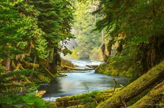 """The Serene Forest - by Malcolm Lowery """"Almost like a work of art and reminiscent of the work of great landscape artists from the past such as Frederic Edwin Church."""""""