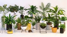 Plants 3D Model | Download Royalty Free Plant 3D Models - 3D Squirrel