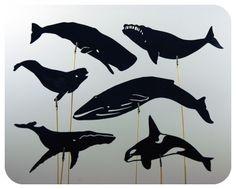 Google Image Result for http://2.bp.blogspot.com/-KhdXZaXjISY/TV6Uyr1w6iI/AAAAAAAAEF0/zV12ZHNTEvE/s1600/whale-shadow-puppets.jpg