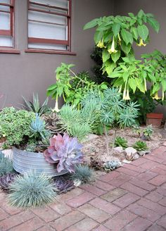 succulent garden | Flickr - Photo Sharing!