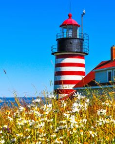 Maine Lighthouses and Beyond: West Quoddy Head Lighthouse.  To enjoy my blog on lighthouses, flowers, and wildlife, tap on the photo.