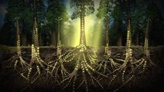 Hidden beneath the surface and entangled in the roots of Earth's astonishing and diverse plant life, there exists a biological superhighway linking together the members of the plant kingdom in...View More →