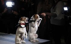 9 Famous Dogs That Are the Biggest Movie Stars - Top Dog Tips