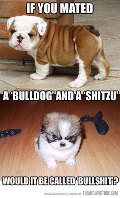 A new dog breed… funny-bulldog-shitzu-puppy-dogs - MOOD - A new dog breed… funny-bulldog-shitzu-puppy-dogs - Funny Animal Jokes, Dog Jokes, Cute Funny Animals, Cute Baby Animals, Funny Cats, Really Funny Memes, Crazy Funny Memes, Stupid Funny Memes, Funny Puppy Memes