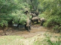 Elephant in camp at Toka Leya Wooden Walkways, Africa Travel, Wilderness, Safari, Elephant, Camping, Tours, River, Island