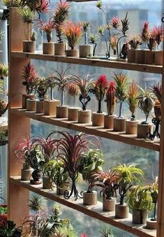21 Most Amazing Air Plant Display Ideas Majestic 21 erstaunlichsten Air Plant Display-Ideen ideacora Succulents Garden, Garden Plants, Indoor Plants, Planting Flowers, Hanging Air Plants, Small Plants, Indoor Herbs, Moss Garden, Succulent Display