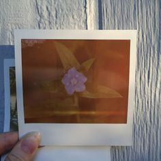 Film: Expired Polaroid film Camera: Macro 5 The macro 5 is one of my personal favorite film cameras to shoot with
