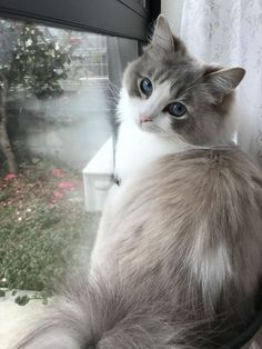 Cute Cat And Dog Names above Cute Animals Funny Pictures. Cute Animals Pictures Drawings at Cute Cat And Dog Coloring Pages Pretty Cats, Beautiful Cats, Animals Beautiful, Pretty Kitty, House Beautiful, Beautiful Pictures, Cute Baby Animals, Animals And Pets, Funny Animals