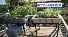 https://www.myaquahouse.com/  Check This Out - Backyard Aquaponics System Design,  7 Reasons that You Shouldn't Most likely to Find out more Right here - Aquaponics Design On Your Own.Top 15 Fads In Learn More Here - Aquaponics Design To Enjoy.