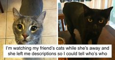 Cat-Sitter Arrives On The Job, Finds Most Hilarious Note Possible From The Owner…