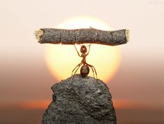 I´ve got the power! - Great ants photographs