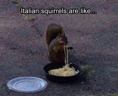 Laugh Out Loud With These Funny Squirrel Memes - World's largest collection of cat memes and other animals Funny Squirrel Pictures, Squirrel Memes, Funny Animal Photos, Funny Animal Memes, Cute Funny Animals, Funny Cute, Funny Photos, Animal Humor, Funny Happy