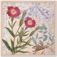 Wall Art for a Nature Lover. Vintage design includes antique engravings of a Corncockle flower, grasshopper and moth.  #botanical #floral #nature #insects #flowers #collage