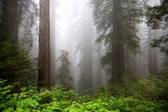 Redwood National Park - CA