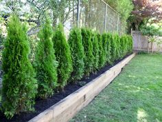Backyard privacy fence landscaping ideas on a budget (20)