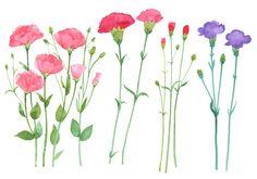 carnation digital clip art set by springpalette on Etsy
