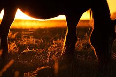 Horse Photography Print by PAMPA on The Life Creative
