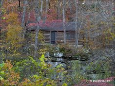 Missouri Ozarks | 59 Ozarks fall foliage photos - 2Cooleys understory foliage pics