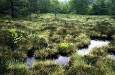 Das Schwarze Moor