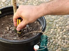 How to Water Your Plants When You're Away