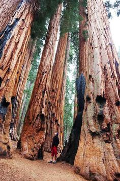 Sequoia National Park, California 29 Surreal Places In America You Need To Visit Before You Die