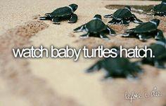 To do before I die: watch baby turtles hatch #bucketlist