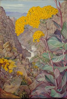 """Marianne North Gallery: Painting View of the valley of Ceres, from Mitchell's Pass, """"Cabbage Plant"""" in front Vintage Botanical Prints, Botanical Drawings, Botanical Art, Plant Illustration, Botanical Illustration, Graphic Illustration, Beautiful Paintings Of Flowers, Marianne North, Forest Painting"""